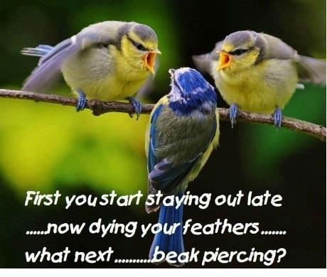 birds,feathers,piercings,rebellious