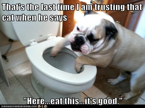 bathroom,bulldog,cat,dogs,i feel bad,toilet