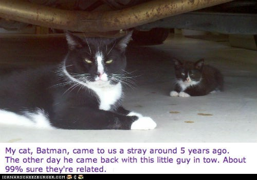 batman,Cats,kitten,Reddit,related,robin,stories,twins