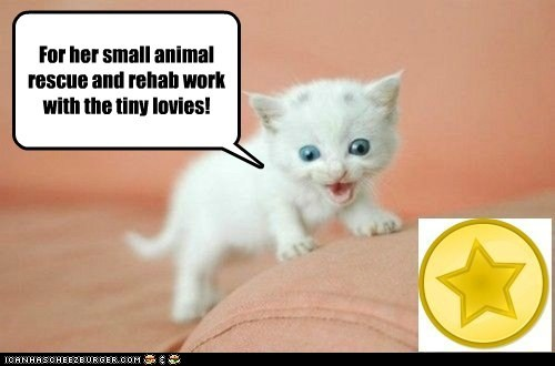 A Gold Star Kitty awarded to jlandis