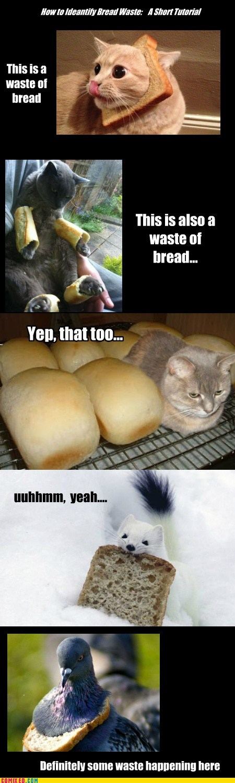 Cheezburger Image 6474065408