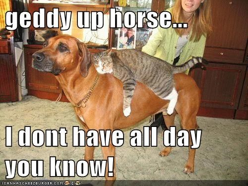 cat dogs giddy up horsey piggy-back ride what breed - 6474305536
