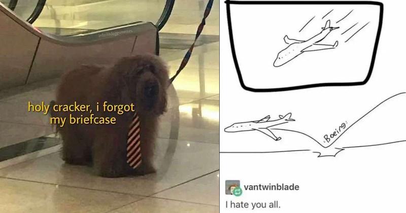 random memes, funny memes