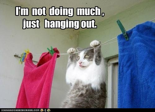 captions Cats clothes dry hang laundry towels - 6474677504