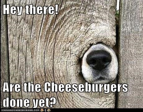Cheezburger Image 6474735872