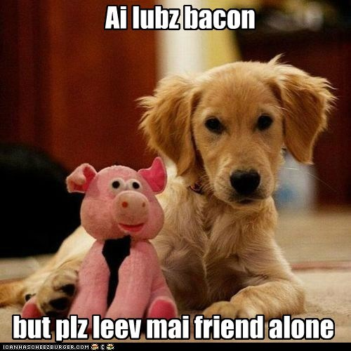 bacon,captions,dogs,golden retriever,pig,puppy,stuffed animal