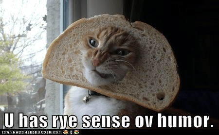 bread captions Cats humor inbread joke pun rye - 6474870016