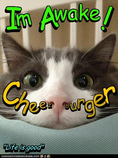 Cheezburger Image 6475156992