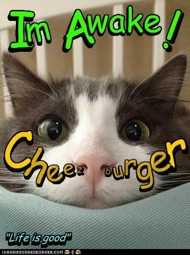 Cheezburger Image 6475156992