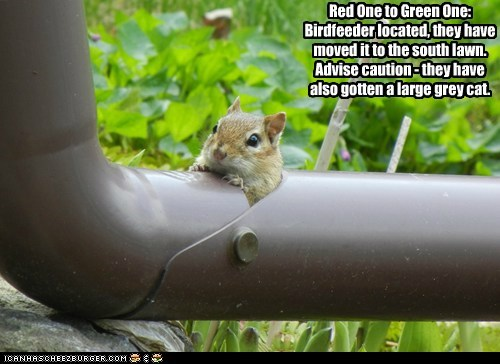 birdfeeder cat chipmunk large moved sneaking tube - 6475173632