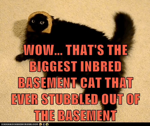 WOW... THAT'S THE BIGGEST INBRED BASEMENT CAT THAT EVER STUBBLED OUT OF THE BASEMENT