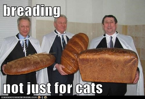 breading Cats old men political pictures