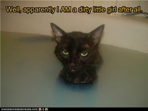 bath captions Cats dirty gross water - 6475440896