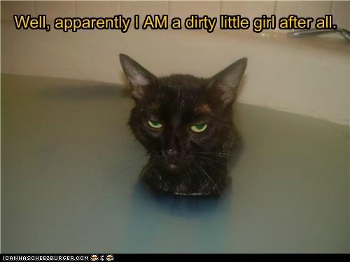 bath captions Cats dirty gross water - 6475440896