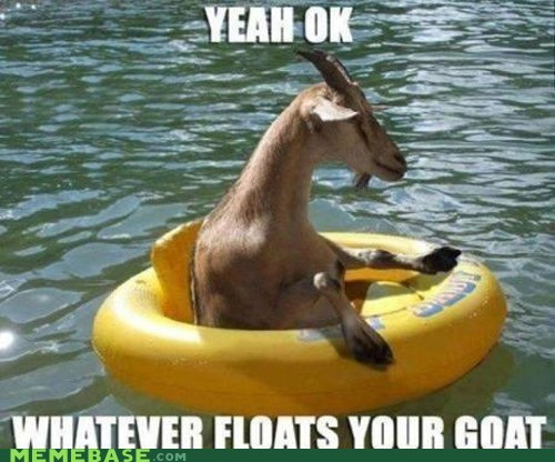 goat,Memes,whatever floats your boat,wtf