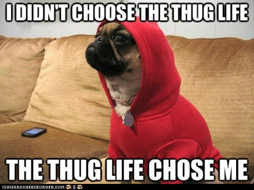 captions,dogs,pugs,sweatshirts,thug life,thugs