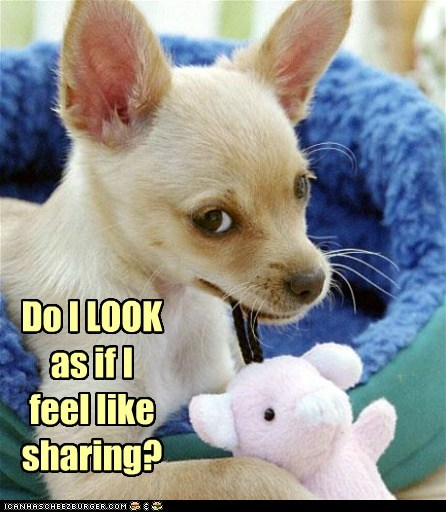captions chihuahua do not want dogs sharing stuffed animal toy - 6475759616