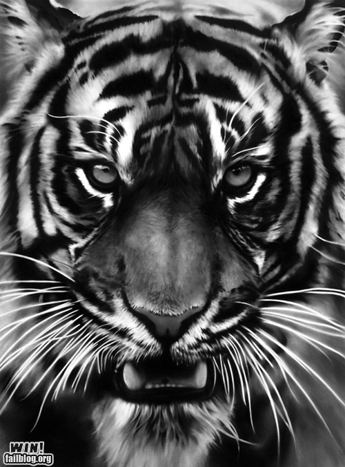 art charcoal design drawing tiger