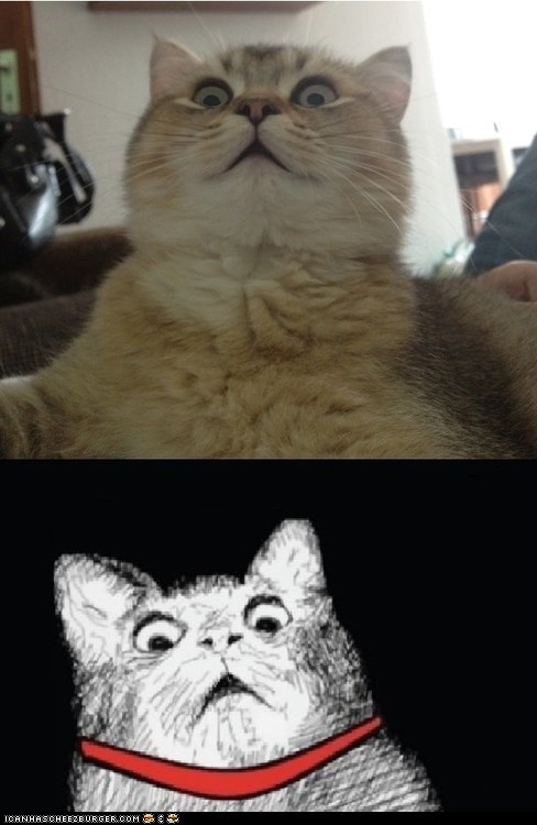 Cats expressions Memes multipanel omg shocked shocking