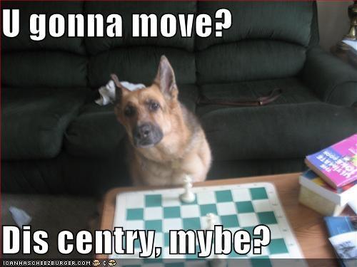 chess,german shepherd