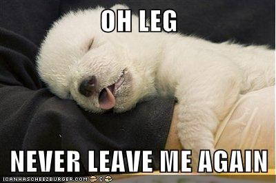dogs dont-leave-me-hanging leg Pillow puppy sleeping what breed
