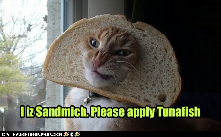 bread captions Cats inbread pretend sandwich tuna tuna sandwich