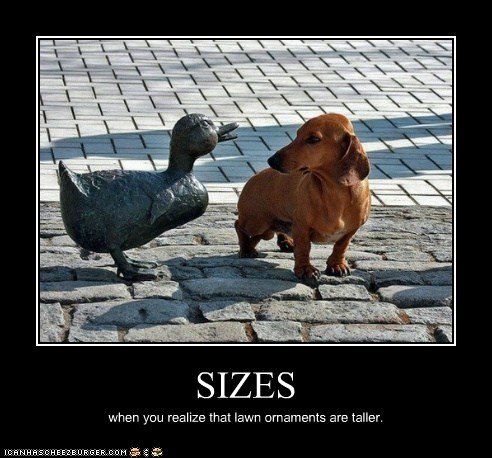 SIZES when you realize that lawn ornaments are taller.