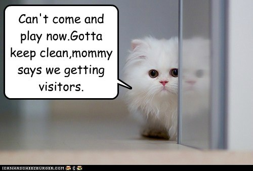 captions Cats friends mom play visitors - 6477653504