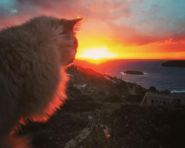 job island greek dreams Cats - 6477829