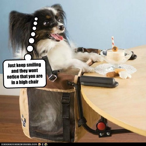 cake,dessert,dogs,high chair,keep smiling,papillon