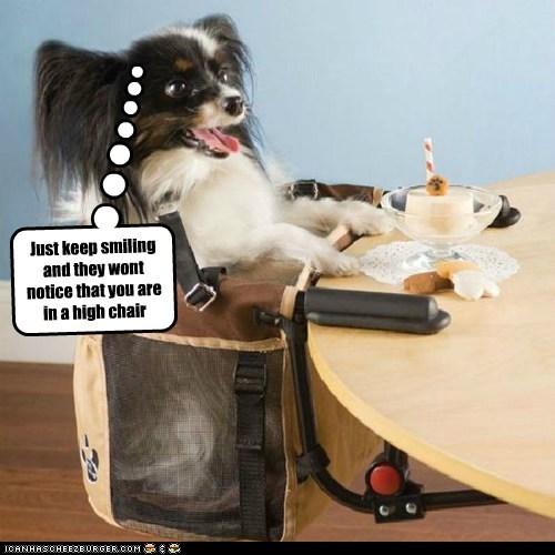 cake dessert dogs high chair keep smiling papillon - 6478199040