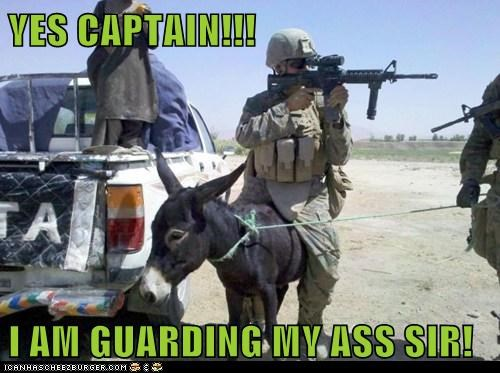 army,ass,captain,captions,donkey,guarding,pun