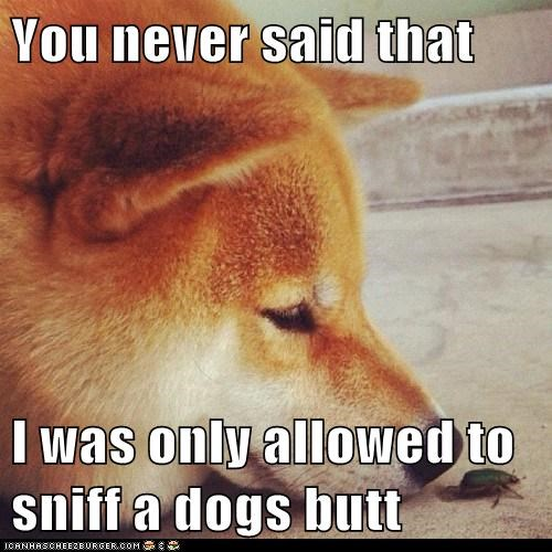 You never said that I was only allowed to sniff a dogs butt