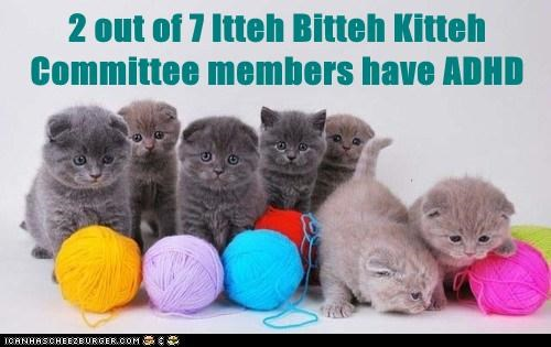 adhd captions Cats distracted itty bitty kitty committe itty bitty kitty committee Statistics yarn