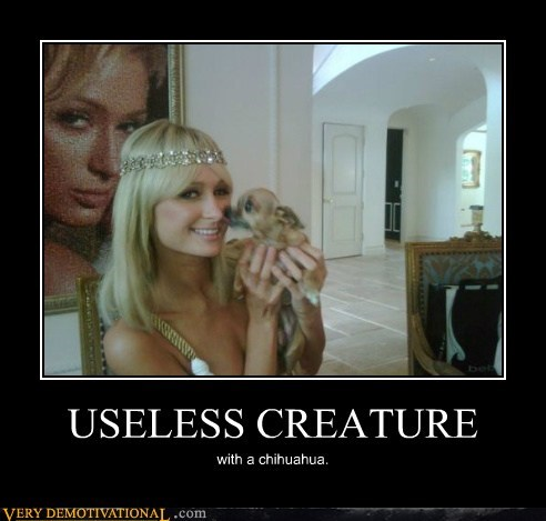 USELESS CREATURE with a chihuahua.