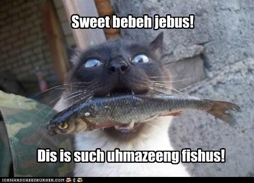 Sweet bebeh jebus! Dis is such uhmazeeng fishus!