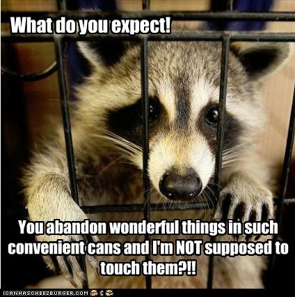 cage entrapment garbage jail locked up raccoon tempting what do you expect - 6478408960