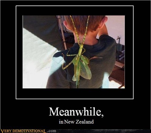 bug Meanwhile new zealand Terrifying - 6478587136