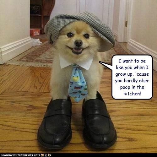 captions,dogs,grow up,kitchen,neck tie,pomeranian,poop,shoes