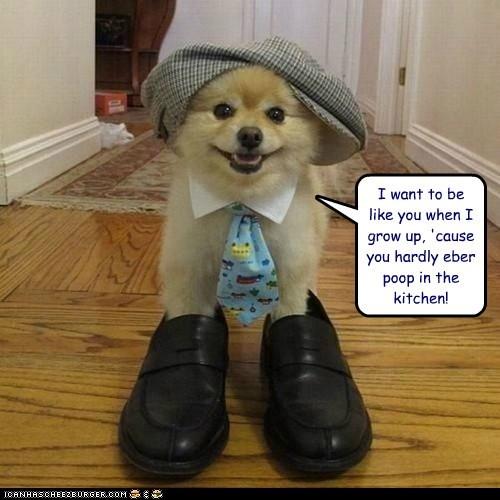 captions grow up kitchen neck tie pomeranian poop shoes - 6478593280