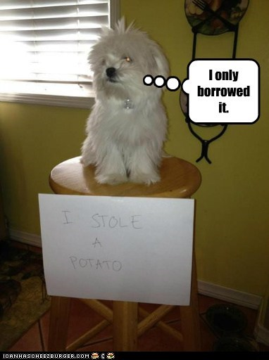 captions,dog shaming,dogs,potato,punishment,thief,time out,what breed