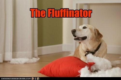 destroyed Fluffy golden lab Pillow stuffing terminator - 6478675200