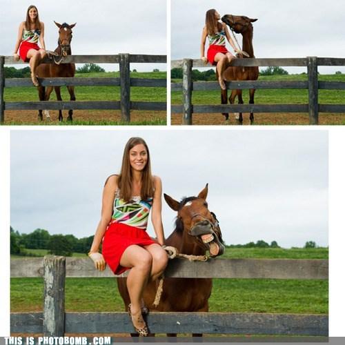 animal Animal Bomb derp horse - 6478884864
