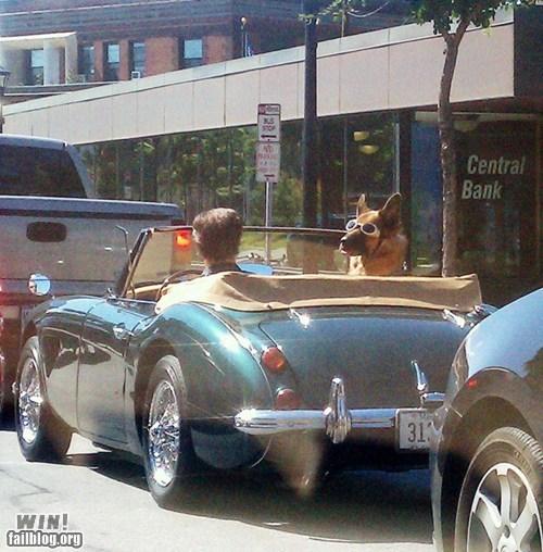 BAMF car classy driving goggles - 6478965760