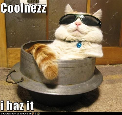Cats,classic,classics,cool,coolness,sunglasses,swag