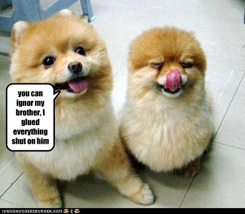 Funny LOL dogs meme of two dogs with a caption that implies one dog glued the other one's 'everything' shut and it looks like it.