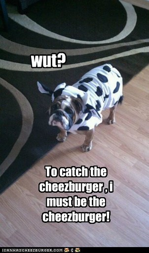 bulldog,cheezburger,costume,cow,disguise,dogs,hunting