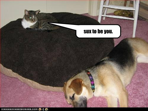 bed cat dogs sucks to be you what breed - 6479070976