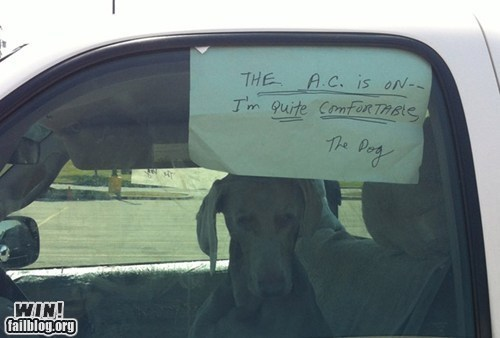 air conditioning car dogs sign - 6479109120