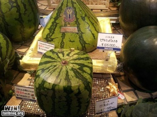 food,melon,oh Japan,Square